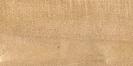 Acero montano (Acer pseudoplatanus)