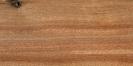 Albero della canfora (Cinnamomum camphora)