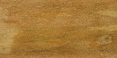 Bangkal (Nauclea orientalis)
