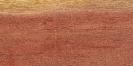 Gaggìa (Acacia farnesiana)