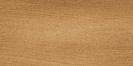 Kauri neozelandese (Agathis australis)